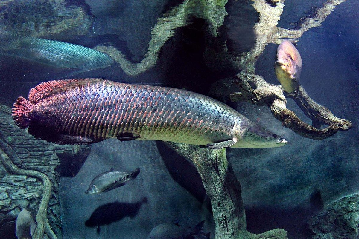 важно понимать, рыбы гиганты фото больше